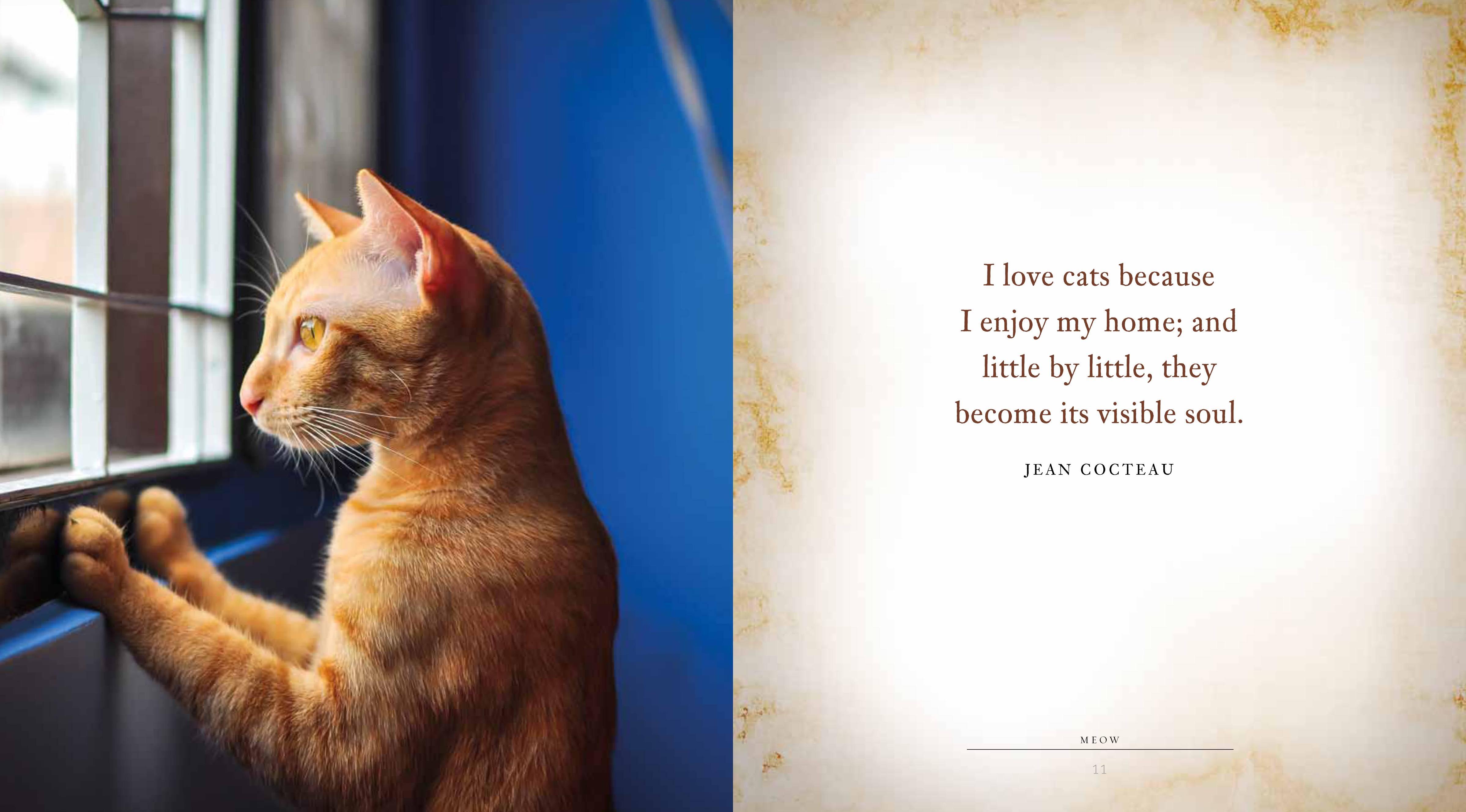 Cat S Meow Books