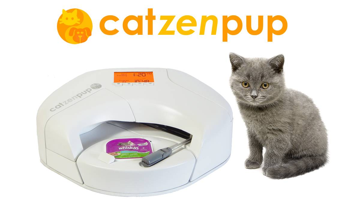 Can You Give Cats Wet Dog Food