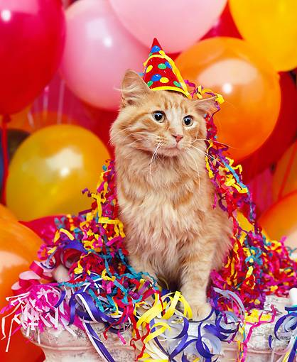 Birthday Orange Cat: Guest Post: Practical Gift Ideas For A Cat's Birthday