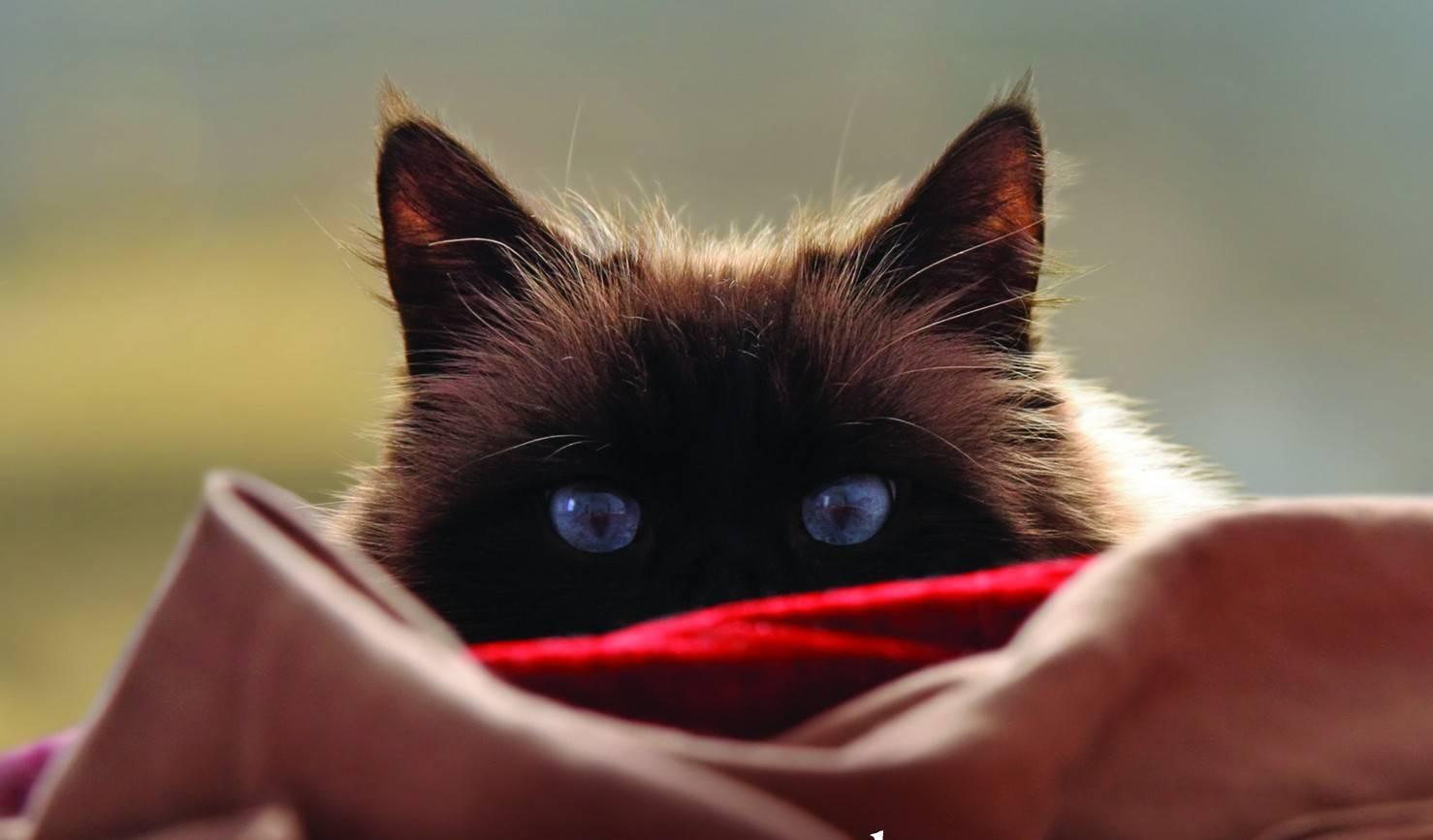 Do indoor cats get bored