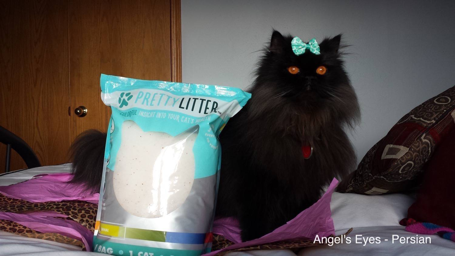 Angel S Eyes The Smart Quot Pretty Litter Quot That Can Detect