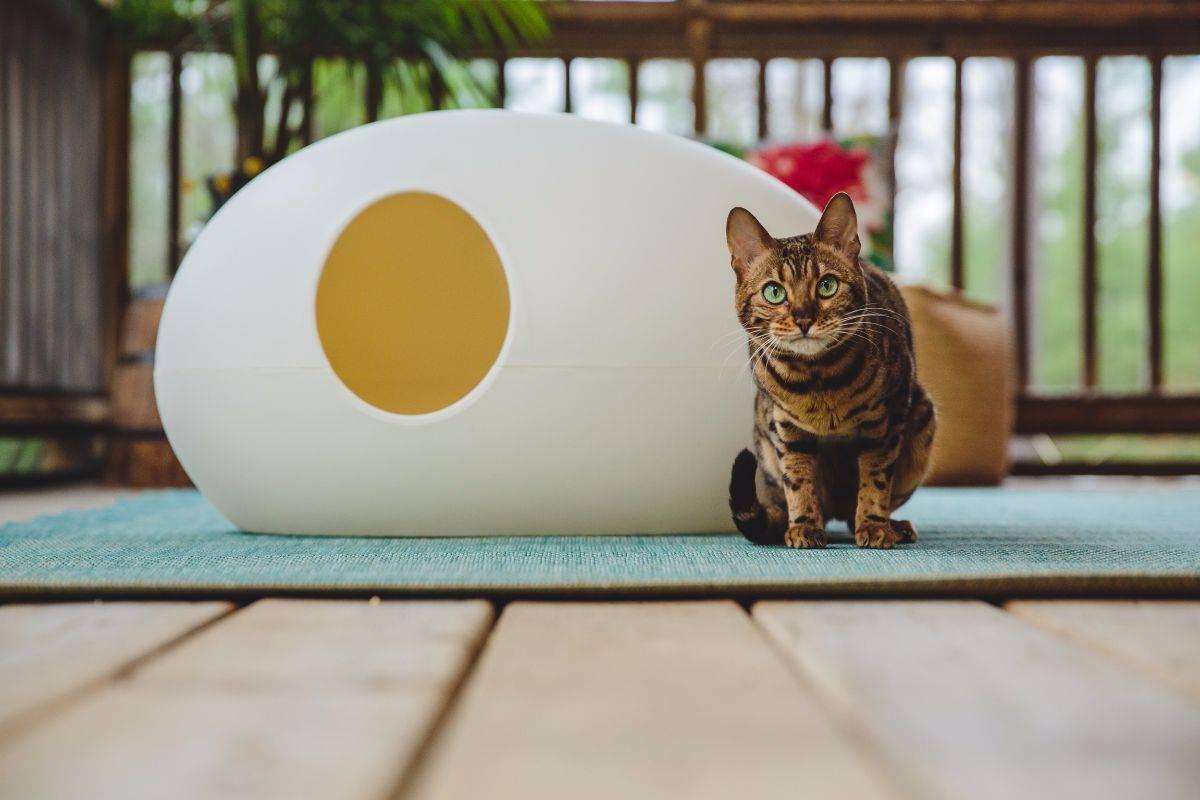 cat litter cost