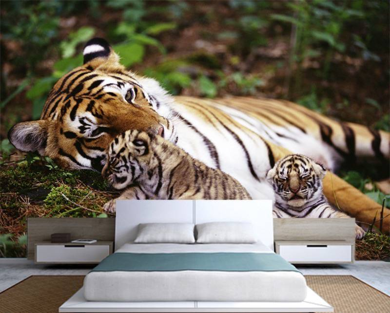 tiger wall murals katzenworld