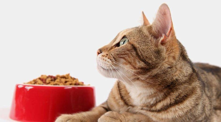 Best Easily Digestible Cat Food