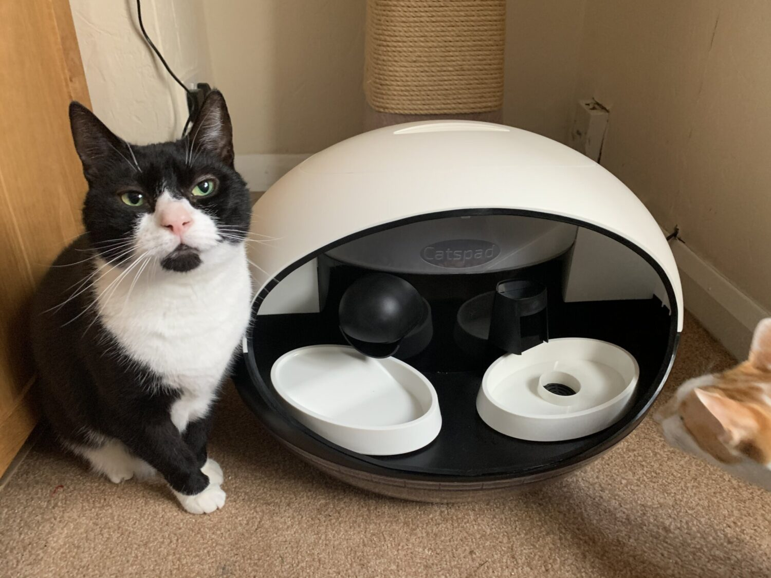 Oliver: Is This our new Space Ship? - Katzenworld