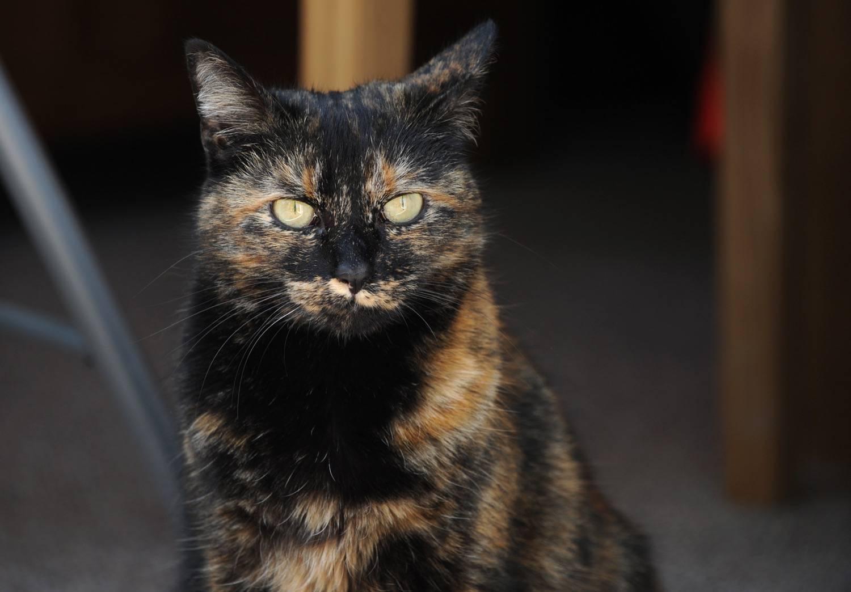 Cats Protection Shropshire