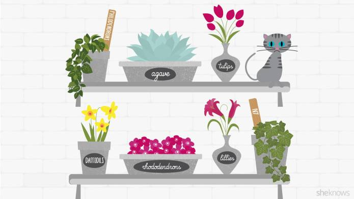 infographic plants that are poisonous to cats katzenworld. Black Bedroom Furniture Sets. Home Design Ideas